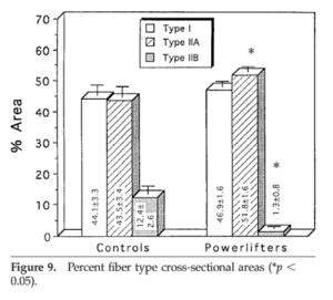 アスリートのタイプ別筋線維の割合