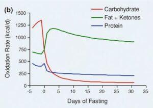 エネルギーになるのは炭水化物と脂肪